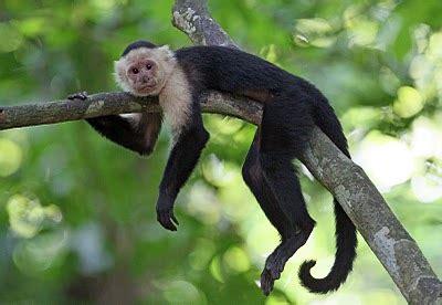 capuchin crypt | dream big. live boldly.