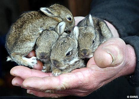 easter bunnies seek new home after digger destroys burrow
