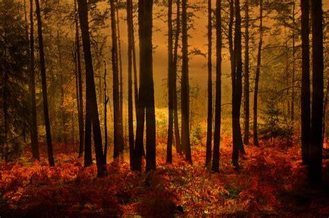 woods sunset wallpaper sunset in the woods by svitakovaeva on deviantart