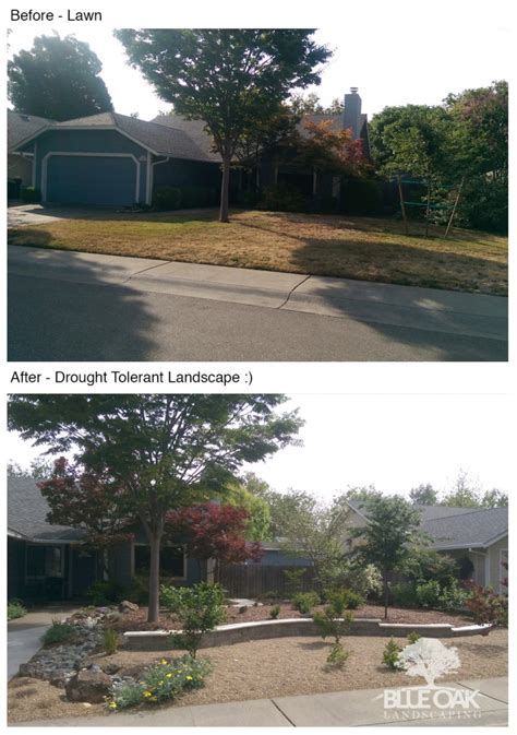 consider removing your lawn for a drought tolerant landscape