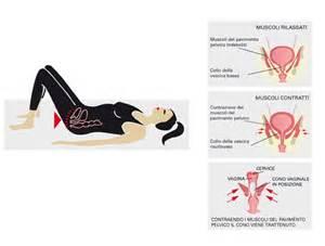 muscoli pavimento pelvico oltre 1000 idee su pavimento pelvico su