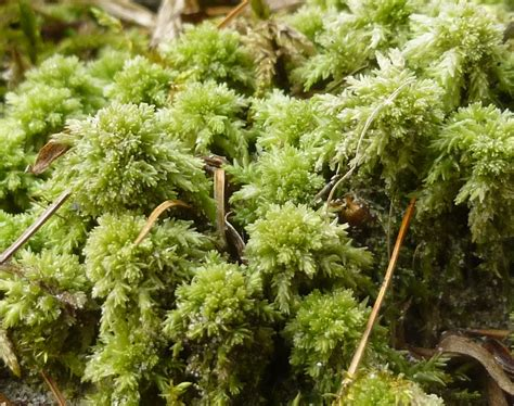 Sphagnum Moss april 2013 new hshire garden solutions page 2