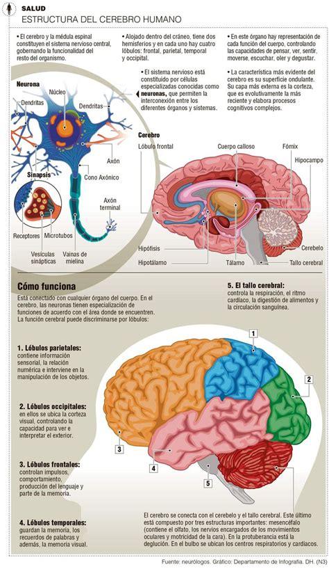el cerebro obeso las 1503139301 las 25 mejores ideas sobre ciencia en y m 225 s actividades del club de ciencia