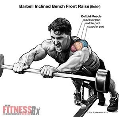 incline bench front raise shoulder плечи build your anterior deltoids with