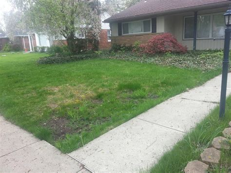 how to grow grass in backyard weed control how do i fix the worst lawn on the street