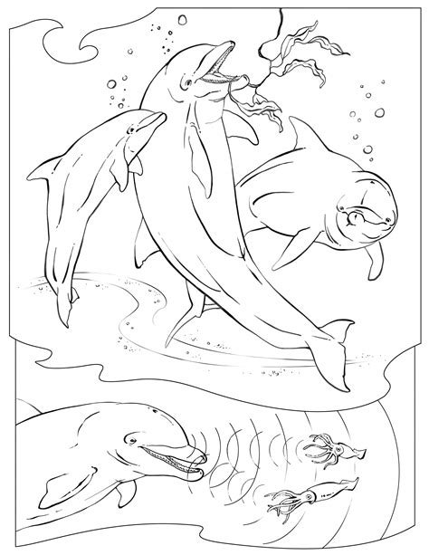 coloring pages animals national geographic curious kids dolphins washington centerville public