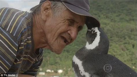 the first man penguin penguin returns home every year to the brazilian man who saved it daily mail online