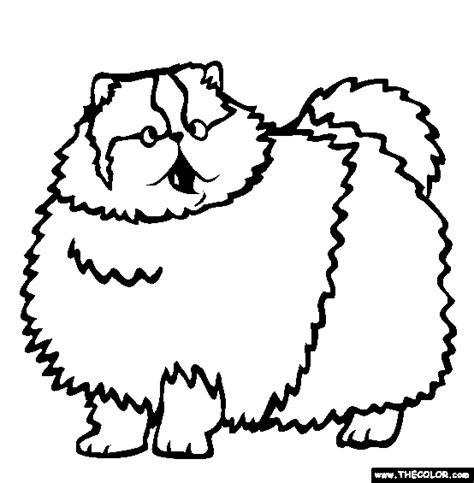 persian cat coloring download persian cat coloring