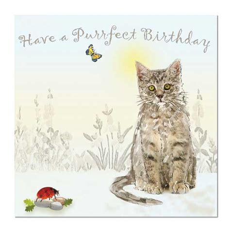 Cat Birthday Card Cute Creatures Collection Wholesale Greeting Cards And