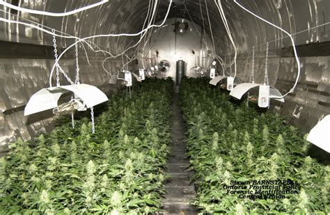 grow op house police can t grab barrie brewery after grow op bust toronto star
