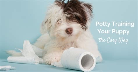easy way to potty a puppy thedogtrainingsecret