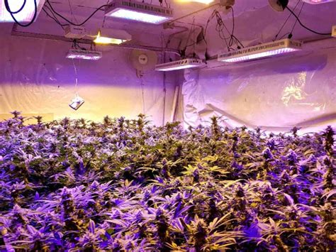 lade grow should you an indoor grow gevaaalik