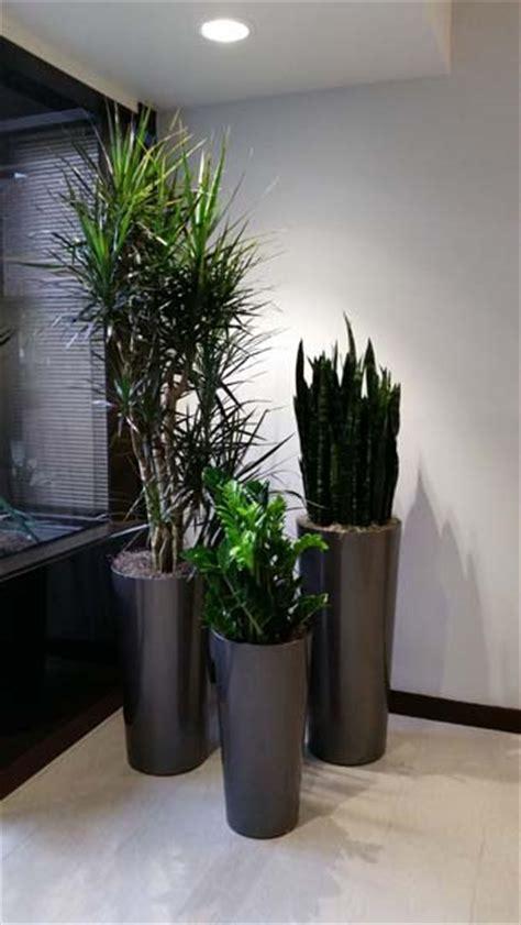 interior plants call center interior plants santa ca plantopia