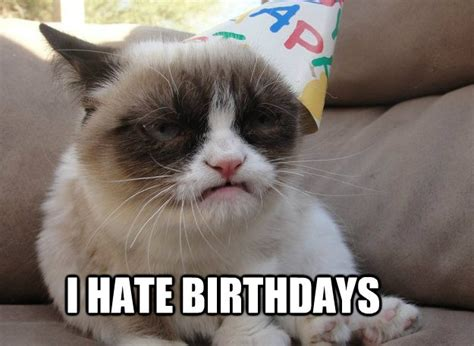 Best Grumpy Cat Memes - best grumpy cat memes that you ll ever see