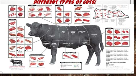 sections of a cow beef cuts