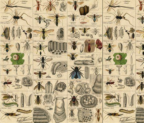 bug shower curtain shower curtain entomology bathroom new house pinterest
