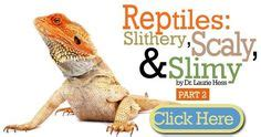 Lizard Toast Meme - bearded dragons on pinterest lizards bunny cages and