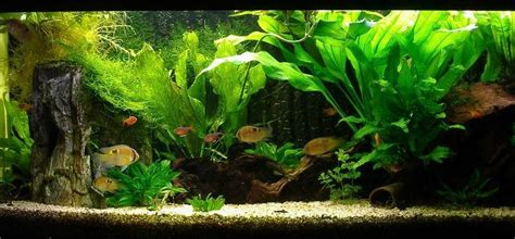 simple aquascaping ideas guppy guide creating depth in an aquascape simple tips