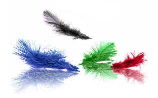colored feathers awesome colored feathers wallpaper hd wallpaper