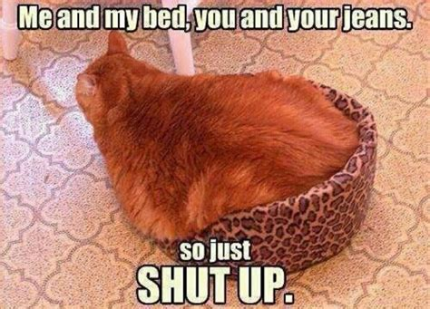 Muffin Top Meme - cat muffin top cat cuteness pinterest