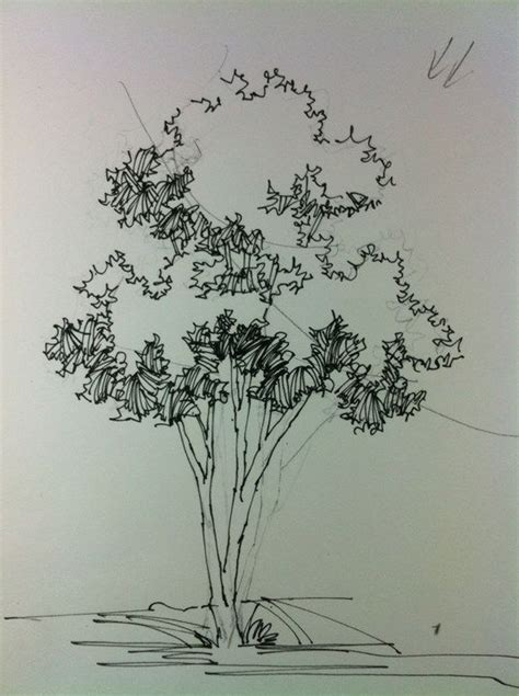 91 best sketching plants images on pinterest drawing