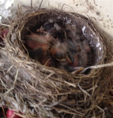 she can quilt soon the baby robins will be flying away