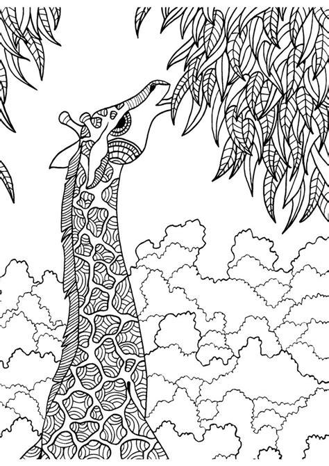 giraffe coloring pages crayola 200 best girafas images on pinterest giraffes wild