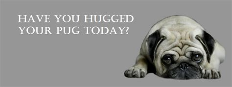 pug pics with quotes pug cover photo for your timeline pug quotes you hugged your pug today