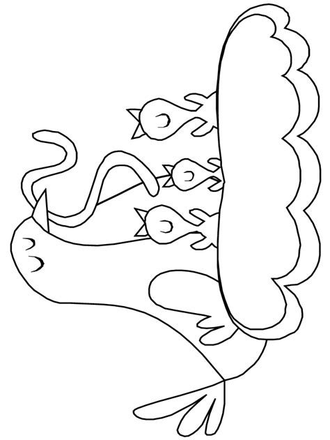 robin birds coloring pages