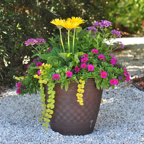 easy flower garden ideas 11 easy colorful container garden ideas costa farms