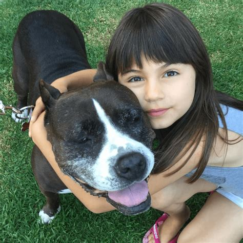 puppy adoption los angeles the one and only award goes to a velvet hippo who is the world a