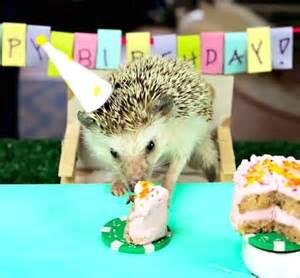 Birthday hedgehog but tiny hedgehogs and