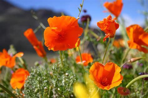 desert flowers flowers change everything home customer