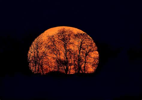 harvest moon harvest moon rising photograph by william jobes