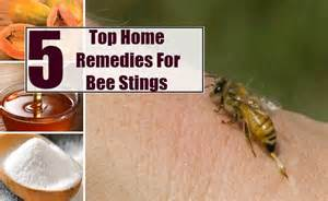 bee sting relief home remedies top 5 home remedies for bee stings remedy