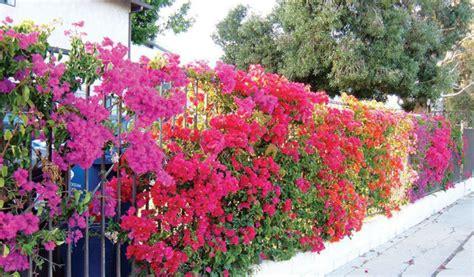Hiasan Rumah Hiasan Dinding Bunga Nuansa Hijau inspirasi deko penyeri dinding pagar harian metro