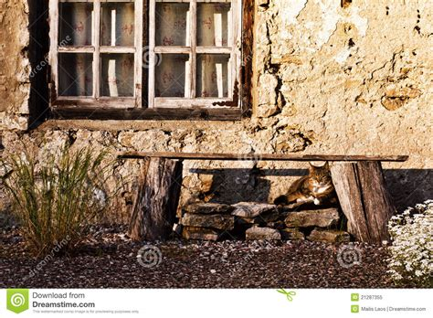 cat window bench cat bench and window royalty free stock photo image 21287355