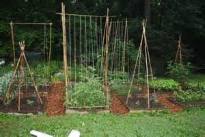 how to build a trellis bamboozling how to build a bamboo trellis let s face the music