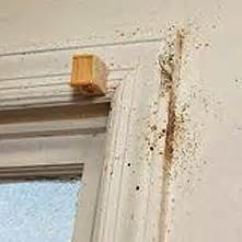 can bed bugs travel through walls how to find bed bugs bed bugs get them out and keep
