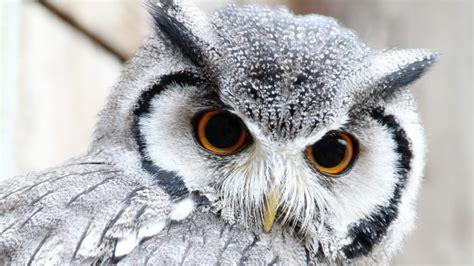 cute owl wallpapers pixelstalknet