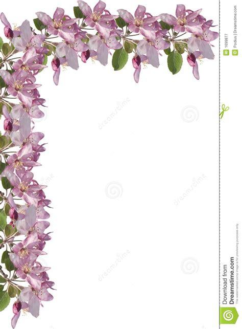 Apple Blossom Border Royalty Free Stock Photography   Image: 1699877