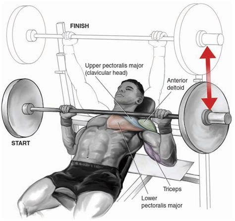 muscles used in incline bench press chest bo dy com
