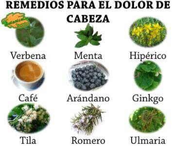 plantas medicinales remedios caseros medicina natural plantas medicinales y remedios para el dolor de cabeza