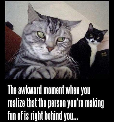 Awkward Cat Meme - awkward moment cat meme cat planet cat planet