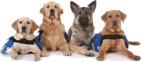types of service dogs service dogs mobility impairments disability info sa