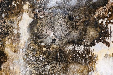 Mold & Bacterial Assessment in NY, NY   ProActive