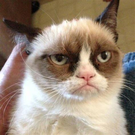 Mad Cat Meme - mad cat face meme generator