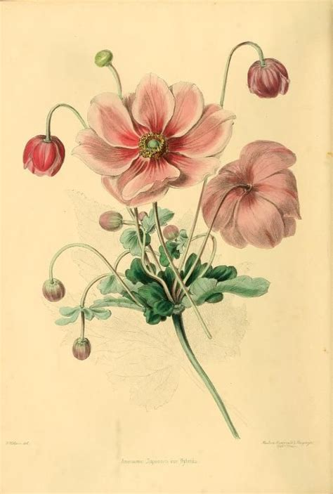 libro the botanical art files 2493 best anatomic illustrations images on botanical illustration botanical