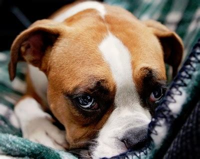 do dogs get depressed days of summer phil hulett and friends podcast