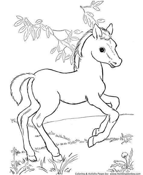 coloring pages of horses and foals coloring pages printable horses and foal coloring